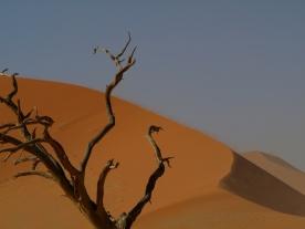 A oto najbardziej chyba fotografowane drzewo w Namibii