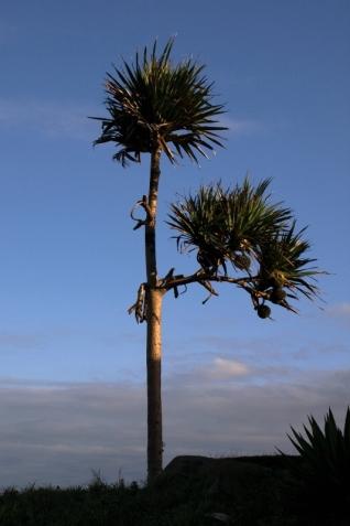 Samotna palma przy plaży