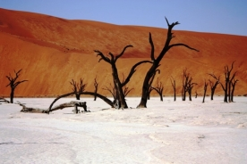 Z ziemi wystają pnie drzew