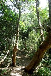 Z plaży do domku prowadzi ścieżka przez tropikalną dzunglę...