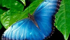 Sanktuariom motyli w Paarl