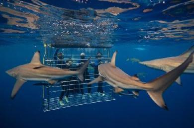 Nurkowanie z rekinami