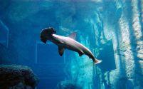 ushaka-marine-world2