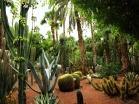 Marrakesz – Jardin Majorelle
