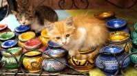 Marrakesz - kociaki