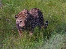 Afrykańskie zwierzaki