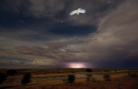 A bird flies at night above the Kalahari Desert - Hannes Lochner