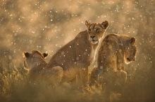 Kalahari – Hannes Lochner