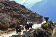"""Na gorskich sciezkach mozemy zobaczyc krzyzowki jaka z krowa, nazywane tutaj """"zopki"""""""