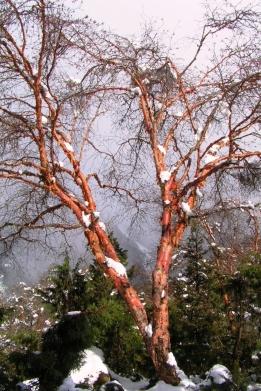 Snieg topnieje...