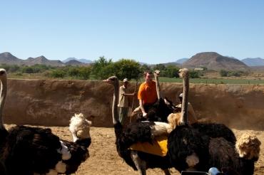 Highgate Ostrich Farm