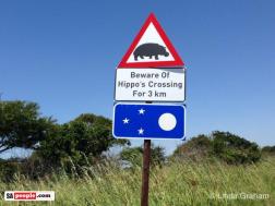 Po ulicach chodzą hipopotamy...