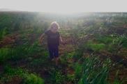 Dno jeziora porośnięte trawą