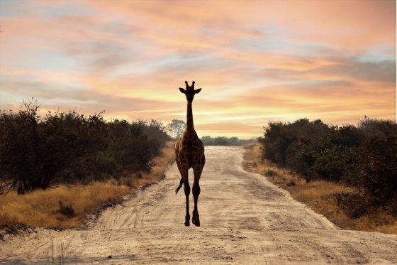 LonelyGiraffe